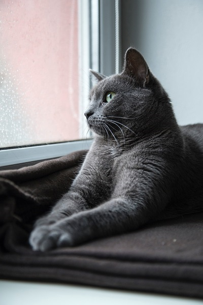 grey cat at house